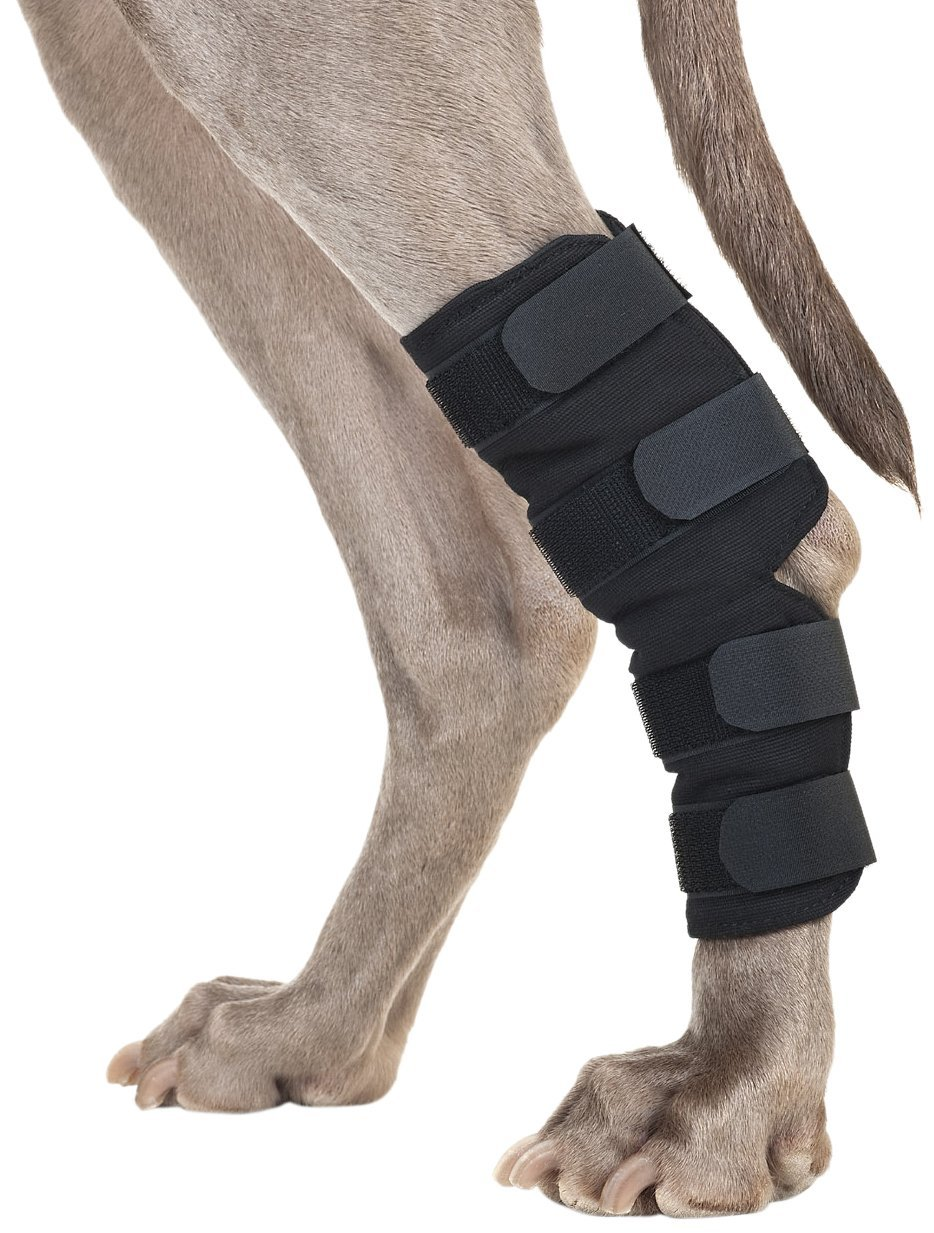 Back on Track Therapeutic Dog Rear LegHock Brace